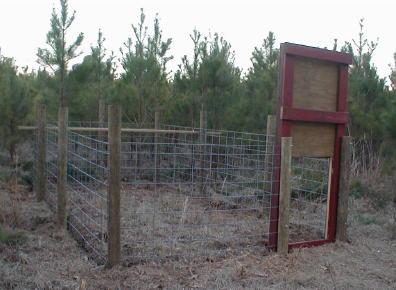 Hog Trap Detailed Plans